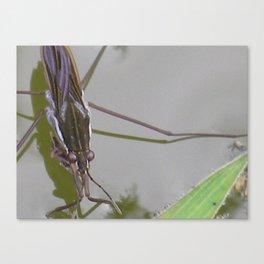 waterbug Canvas Print