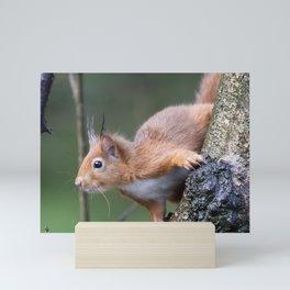 Red Squirrel 2 Mini Art Print