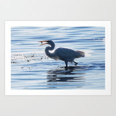 Great Egret Catch Art Print