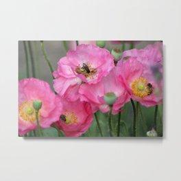 Pink Poppy Flowers With Honeybees Metal Print