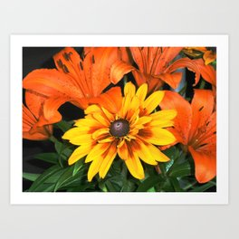 Flowers Tiger Lilies Art Print