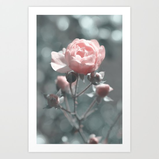 Romantic rose at Backlight- roses Art Print