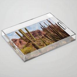 Cacti Variety Acrylic Tray