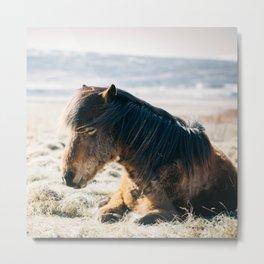Horse pony nature Metal Print