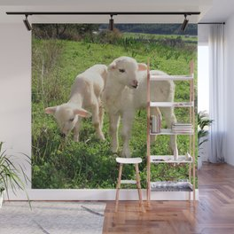 Spring Lambs Grazing On Farmland Wall Mural