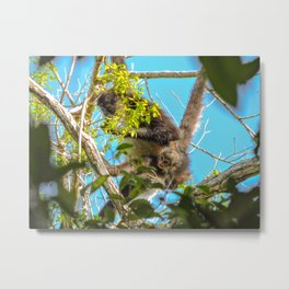 Spider Monkeys El Mirador, Guatemala Metal Print