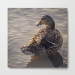 duck 01 - soft focus creates a serene portrait Metal Print