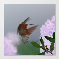 hummingbird Canvas Prints featuring Hummingbird by dBranes