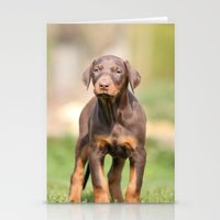 doberman Stationery Cards featuring doberman pinscher by Jana Behr
