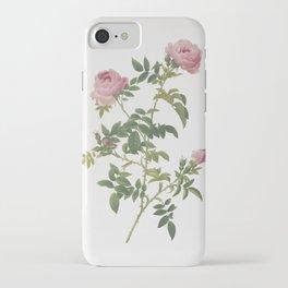 Vintage Rose of the Hedges Illustration iPhone Case