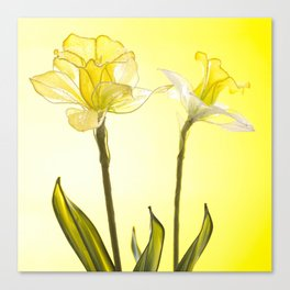 Yellow Botanical Summer Blossom Canvas Print