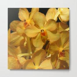 Golden Vanda Orchids Metal Print
