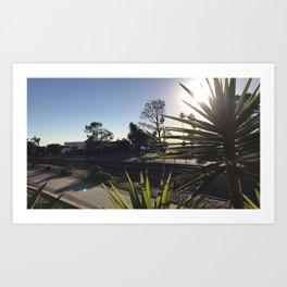 Flax sun tracks Art Print