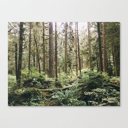 Mt. Seymour Forest Canvas Print