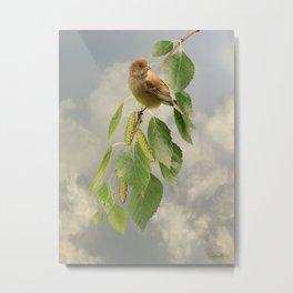 Indigo Bunting on Birch Tree Metal Print