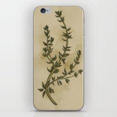 Thyme iPhone & iPod Skin