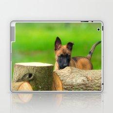 Cute Malinois Dog after the wood Laptop & iPad Skin