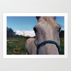 Colorado Mare Art Print