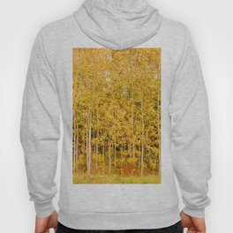 Beautiful and colorful autumn aspens in a row Hoody
