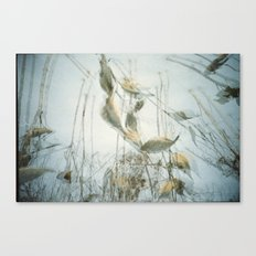 Milk Weed Canvas Print