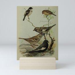 Sharpe's Seedeater, Lark Bunting Mini Art Print