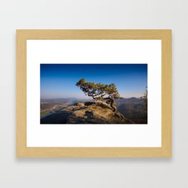 Crooked Tree in Elbe Sandstone Mountains Framed Art Print