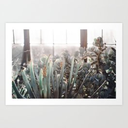 Greenhouse Blues Art Print