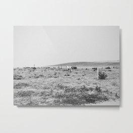 MOO II / Inverness, CA Metal Print