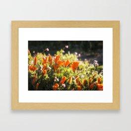 California poppy   Noriko Aizawa Buckles Framed Art Print
