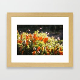 California poppy | Noriko Aizawa Buckles Framed Art Print