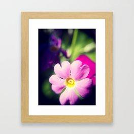 Pink Primula Framed Art Print
