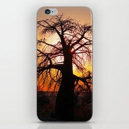 Baobab with evening light - Africa wildlife iPhone Skin