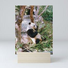 Panda Mini Art Print