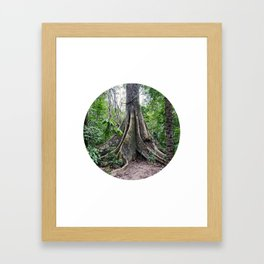 Massive Tree in Amazon Jungle Circle Fine Art Print Framed Art Print