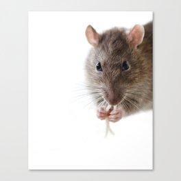 Rat! Canvas Print