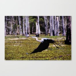 Taking Flight th the Great Blue Heron Canvas Print