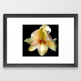 Sunshine In The Dark  Framed Art Print