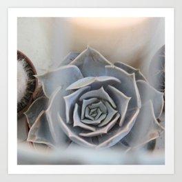 Cactus in Birdcage Art Print