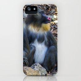 Monkeys - Mandrill iPhone Case