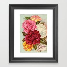 Antique Roses Framed Art Print
