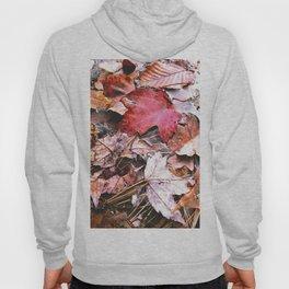 Brisk Autumn  Hoody