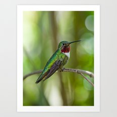 Perched Hummingbird Art Print