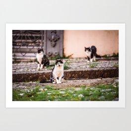 Street Cats from Brazil Art Print
