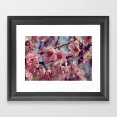 Sakura... One Spring in Beijing Framed Art Print