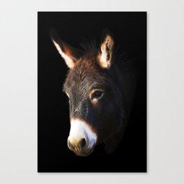 Donkey Black Background Canvas Print