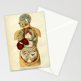Internal organs of the Human Body Stationery Cards