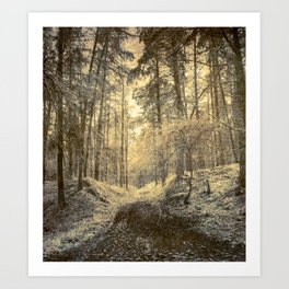 Silver forest Art Print
