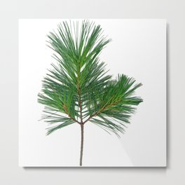 Basic Norway Pine Metal Print