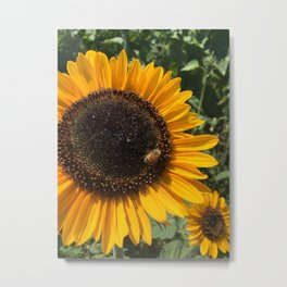 Sunflower and Honeybee Metal Print