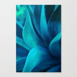 Succulent Curves Canvas Print